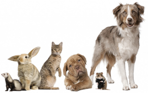 Pet-Insurance-1024x642-web