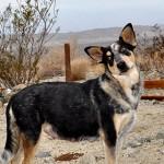 dog-camp-Thelma-web