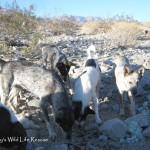 Dog camp 06 14 13
